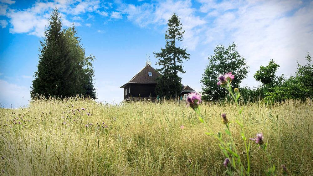 Jaro na Kozlovském kopci
